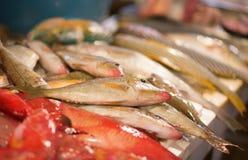 Fiska på en fiskmarknad, Boracay, Filippinerna Fotografering för Bildbyråer