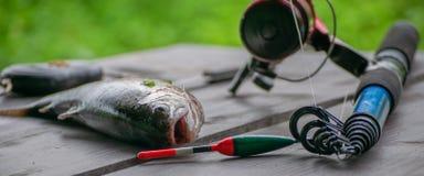 Fiska på floden royaltyfri bild