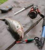Fiska på floden royaltyfri fotografi