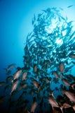 fiska skolan fotografering för bildbyråer