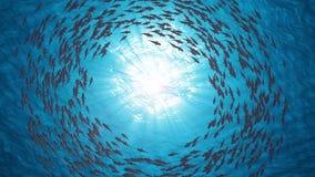 fiska skolan Hajar simmar i en cirkel vektor illustrationer