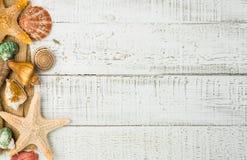 Fiska stjärna- och havsskal på träbakgrunden Arkivfoton