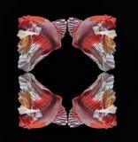 Fiska stridighet, den härliga fisken, den färgrika fisken som slåss Siam, den färgrika svansen, framstående handling, bra ställin royaltyfri illustrationer