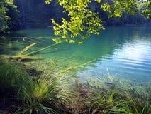 Fiska synligt i klart vatten, den blåa sjön i Plitvice, Kroatien Arkivbilder