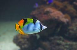 fiska tropiskt Royaltyfria Foton