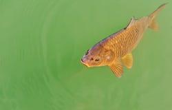 fiska vatten Arkivfoto