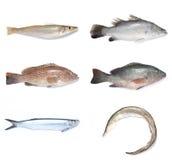 fiskar Arkivfoto