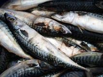 fiskar Fotografering för Bildbyråer