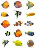 fiskar Royaltyfria Foton