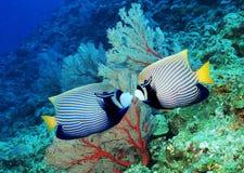 fiskar Arkivfoton