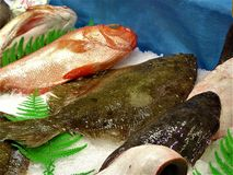 fiskar Royaltyfri Bild