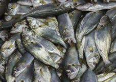 fiskar den nya marknaden Arkivbilder