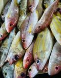 fiskar den tropiska försäljningen Arkivfoton