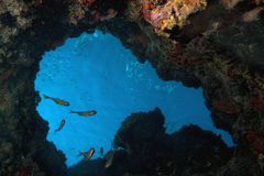 fiskar den undervattens- soparen Royaltyfri Bild