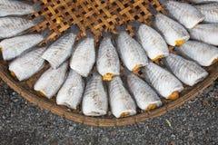 Fiskar för uttorkningsnakeskingourami Royaltyfri Foto