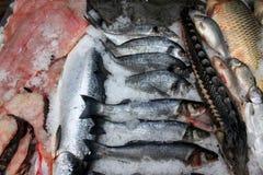 fiskar försäljning Royaltyfri Bild