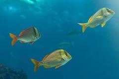 fiskar flotta royaltyfria bilder