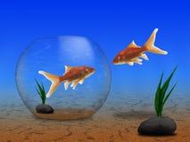 fiskar guld två Royaltyfri Fotografi