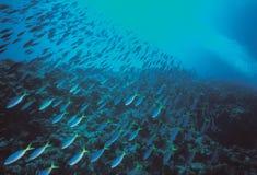 fiskar havet Royaltyfri Bild