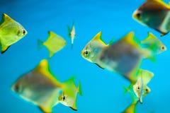 Fiskar i akvarium Royaltyfri Fotografi