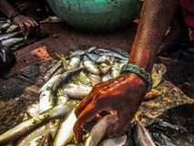 fiskar i en marknad Royaltyfria Bilder