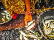 fiskar i en marknad Arkivbilder