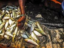 fiskar i en marknad Royaltyfri Bild