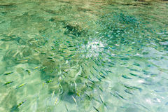 Fiskar i havet av Thailand, krabihav Royaltyfri Bild