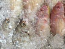 fiskar i marknaden arkivbild