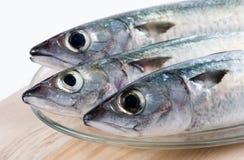 fiskar nytt Arkivbild