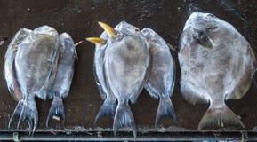 fiskar nytt Fotografering för Bildbyråer