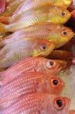 fiskar o-red Arkivfoton