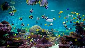 Fiskar och korall, undervattens- livstid Royaltyfria Bilder