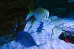 Fiskar på akvariet Dubai Arkivbild