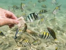 Fiskar på sandig havsbotten Arkivfoton