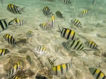 Fiskar på sandig havsbotten Royaltyfri Foto