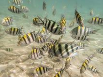 Fiskar på sandig havsbotten Arkivbild