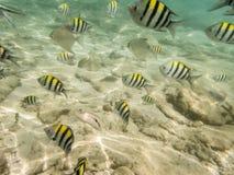 Fiskar på sandig havsbotten Royaltyfria Foton
