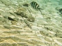 Fiskar på sandig havsbotten Royaltyfria Bilder