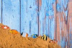 Fiskar på stranden royaltyfri fotografi