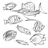 Fiskar samlingen Arkivbilder
