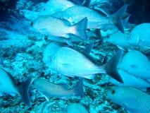 fiskar school tropiskt arkivbild