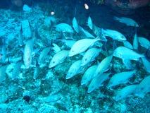 fiskar school tropiskt arkivfoton