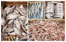 Fiskar som är till salu i fisken, marknadsför i Bodrum Royaltyfri Bild
