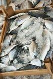 Fiskar som är till salu i fisken, marknadsför i Bodrum Arkivfoto