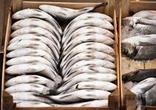 Fiskar som är till salu i fisken, marknadsför i Bodrum Royaltyfria Foton