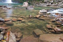 fiskar som simmar vattenfall Royaltyfri Foto