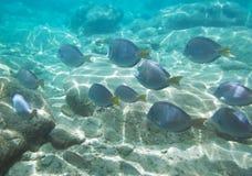 fiskar stimet Royaltyfria Bilder