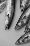 Fiskar till salu Arkivbild