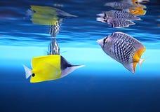 fiskar tropiskt Arkivbilder